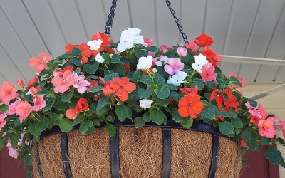Hanging Basket Care